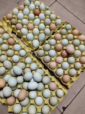 湖北省荆州市石首市土鸡蛋 食用 箱装