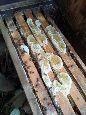 广东省广州市番禺区土蜂蜜 塑料瓶装 2年以上 98%