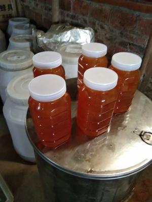 广西壮族自治区桂林市恭城瑶族自治县土蜂蜜 塑料瓶装 2年以上 90%以上