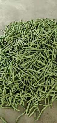 广西壮族自治区北海市合浦县白花四季豆 10cm以上
