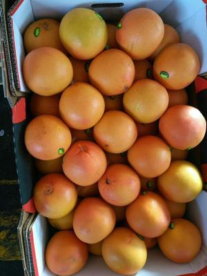 广东省广州市白云区西柚 1斤以下