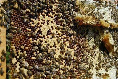 四川省宜宾市屏山县土蜂蜜 散装 2年以上 90%以上