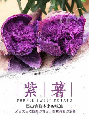 广东省潮州市湘桥区广紫薯1号 3两~6两