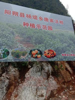 广西壮族自治区桂林市阳朔县沃柑 统货 2 - 3两