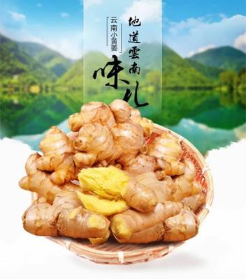 广东省潮州市湘桥区黄姜 2~4两 带土