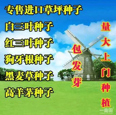 这是一张关于草坪种子 的产品图片