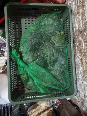 湖北省武汉市江汉区牛蛙肉 简加工