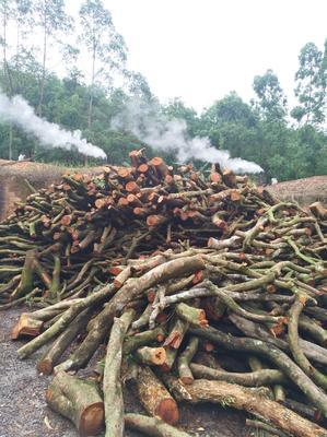 广东省茂名市高州市果木木炭  一级优质果木炭