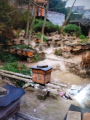 广西壮族自治区玉林市博白县杉木蜂箱
