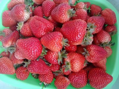 吉林省吉林市磐石市红颜草莓 20克以上