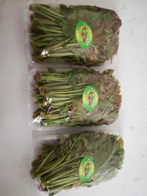 陕西省渭南市华县红油香椿芽 混装通货