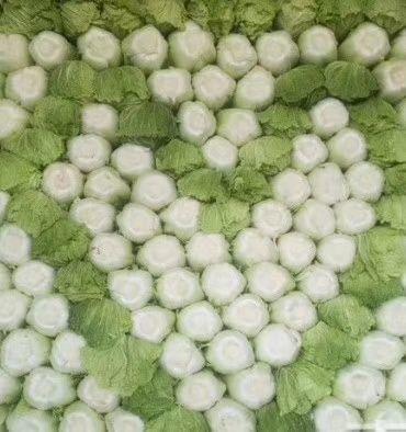 广西壮族自治区崇左市天等县菊锦大白菜 2~3斤 净菜