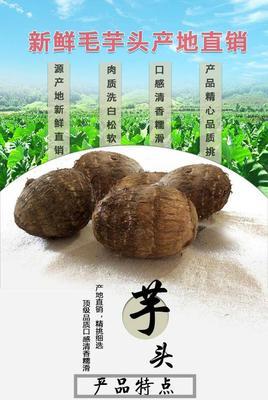 广东省潮州市湘桥区毛芋头 6cm以上