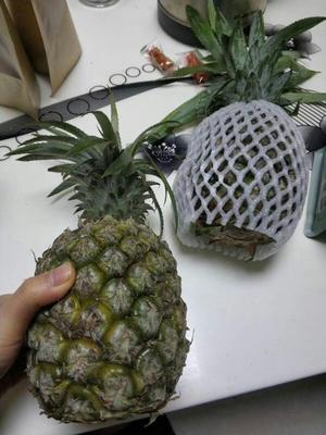 陕西省西安市长安区香水菠萝 1 - 1.5斤