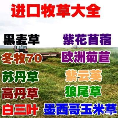辽宁省沈阳市大东区牧草