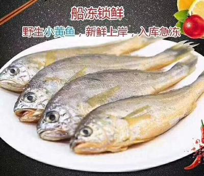 山东省威海市乳山市冰冻鱼类