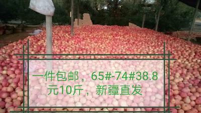 新疆维吾尔自治区阿克苏地区温宿县阿克苏冰糖心苹果 65mm以上 条红 光果