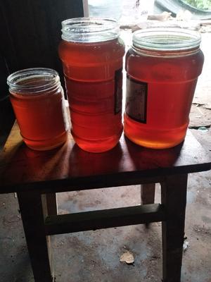 四川省乐山市沙湾区土蜂蜜 塑料瓶装 2年以上 90%以上