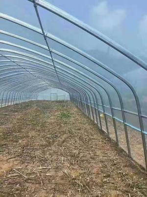 天津静海县蔬菜大棚