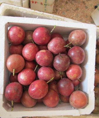 广西壮族自治区玉林市北流市紫色百香果 80 - 90克