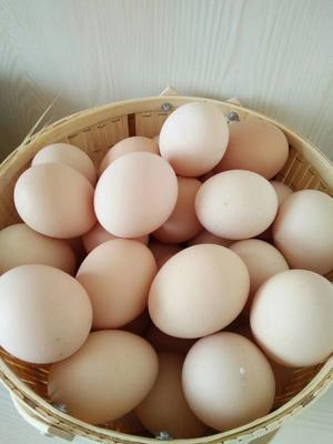 江西省上饶市上饶县土鸡蛋 食用 箱装