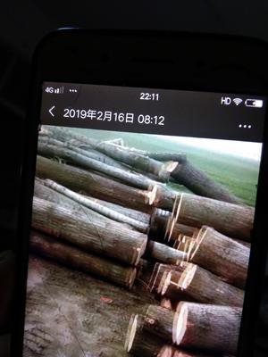 河南省周口市郸城县杨木