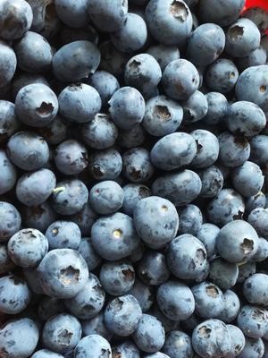 云南省昆明市西山区莱克西蓝莓 12 - 14mm以上 鲜果