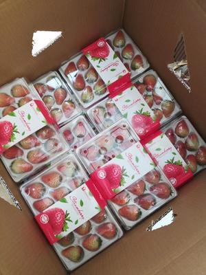 辽宁省丹东市东港市九九草莓 20克以上