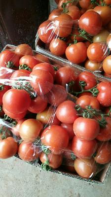 广西壮族自治区南宁市西乡塘区大红硬果 通货 弧二以上 大红