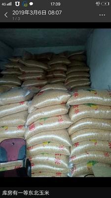 四川省成都市锦江区玉米干粮 净货 水份14%-16%