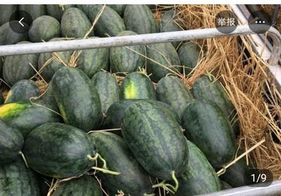 这是一张关于黑美人西瓜 6斤打底 8成熟 2茬 有籽 的产品图片