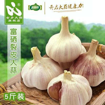 山东省济宁市金乡县紫皮大蒜 5~5.5cm 多瓣蒜