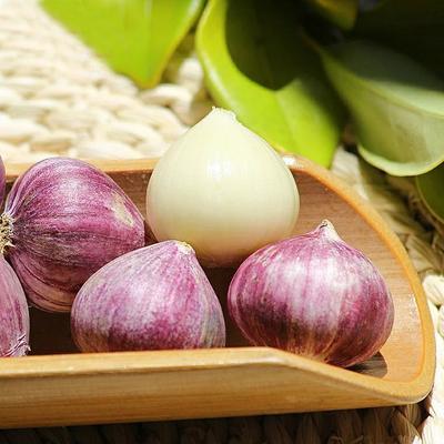 这是一张关于紫皮大蒜 4.5cm以下 独头 的产品图片