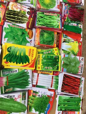 浙江省金华市义乌市红苋菜种子  各种菜种子