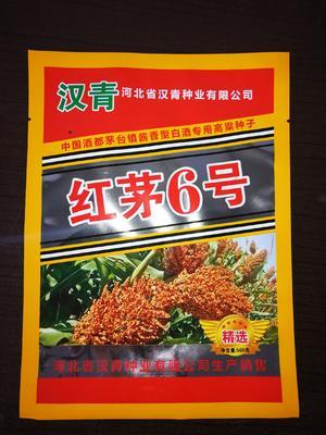 河北省沧州市青县红茅六号高粱种子 常规种 ≥90%