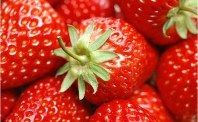 江苏省无锡市锡山区红颜草莓  20克以上 小果10可 中果15