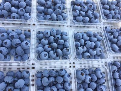 黑龙江省大兴安岭地区大兴安岭地区加格达奇区蓝丰蓝莓 10 - 12mm以上 鲜果