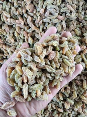 新疆维吾尔自治区吐鲁番市鄯善县新疆绿葡萄干 二等