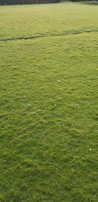 这是一张关于台湾草皮 的产品图片
