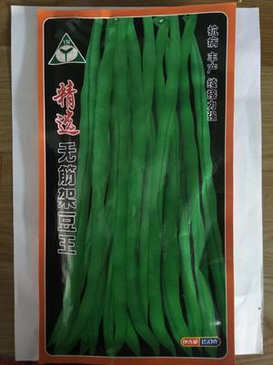 山东省潍坊市寿光市长青豆角种子 ≥90%
