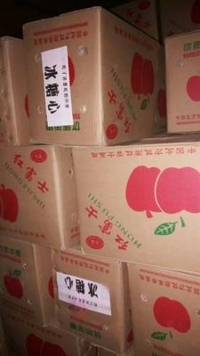 这是一张关于红富士苹果 75mm以上 片红 膜袋 的产品图片
