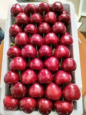 这是一张关于美早樱桃 10-15mm 12-15g 的产品图片