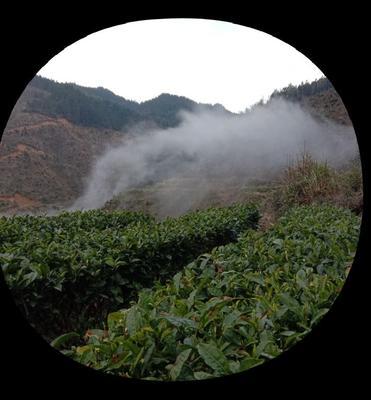 这是一张关于高塘云雾茶 三级 散装 的产品图片