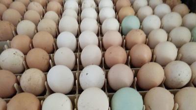 河北省保定市安国市贵妃鸡蛋 孵化 箱装