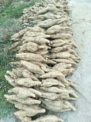 这是一张关于粉葛 2.5-3.0斤 的产品图片
