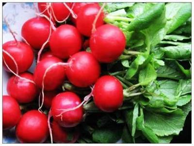 这是一张关于樱桃萝卜种子 原种 的产品图片