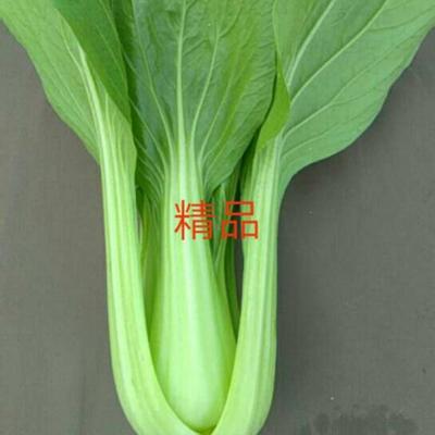 山东省菏泽市曹县夏萍青梗菜 1~2两