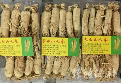 这是一张关于园参  全须生晒参 25支头一斤人参白参的产品图片
