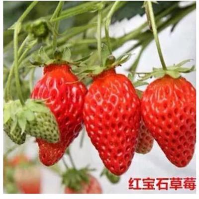 这是一张关于天仙醉草莓 20克以下 的产品图片