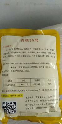 河北省沧州市青县糯35 杂交种 ≥95%